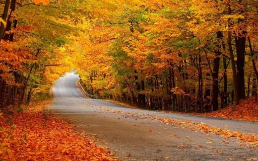 Autumn-Forest-Street-1920x1200