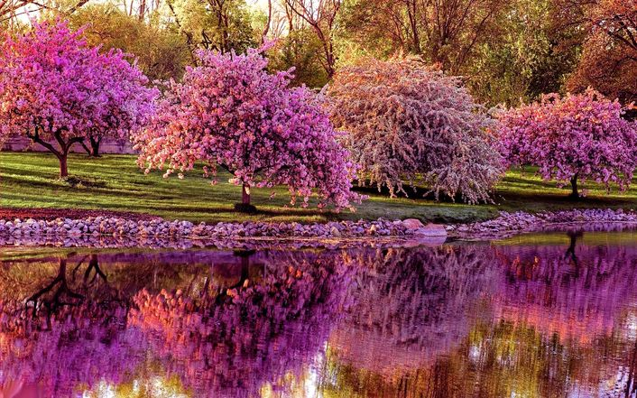 blossomed-spring-trees-along-the-river-1417-706