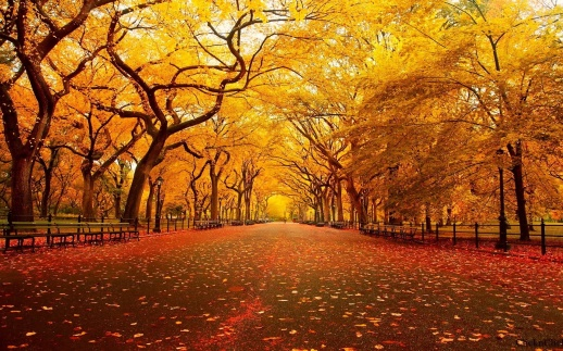central-park-new-york-autumn-wallpaper-16605