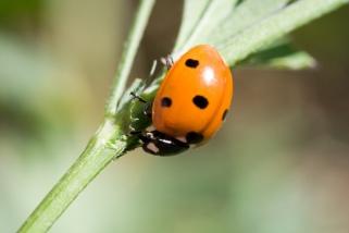 ladybug-1389882